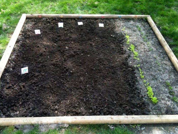 1st garden planted 2011